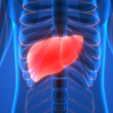 Mi querido hígado