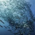 21 noviembre: Día Mundial de la Pesca
