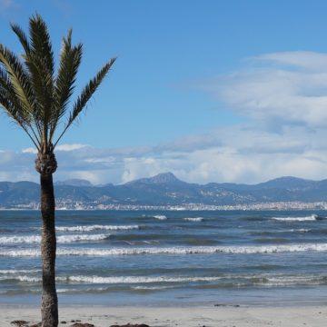 PALMA BEACH DEFIENDE ANTE CORT LA INTEGRACIÓN DE PLAYA DE PALMA EN LA LÍNEA DEL FUTURO TRANVÍA AL CENTRO DE CIUTAT